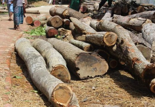 ফেঞ্চুগঞ্জে সরকারি জায়গার গাছ চুরি, থানায় মামলা