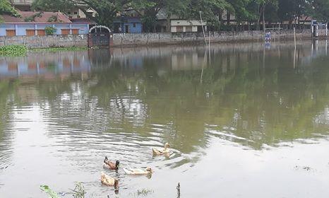 বালাগঞ্জের উপজেলা সদরস্থ খেলার মাঠের বেহাল দশা