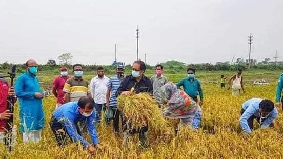 দক্ষিণ সুরমায় কৃষকদের উৎসাহিত করতে জমিতে ধান কাটলেন এমপি সামাদ চৌধুরী
