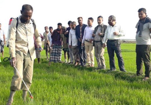 বালাগঞ্জে ক্ষতিগ্রস্ত বীজতলা পরিদর্শন করলেন উর্ধ্বতন কর্মকর্তা